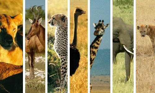 2013-02-05-cover_animals.jpg