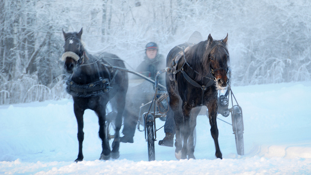 2013-02-08-Norwayhorseridinginsnow.jpg