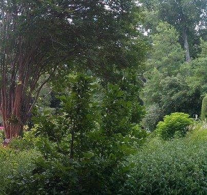 2013-02-08-blandforest.jpg