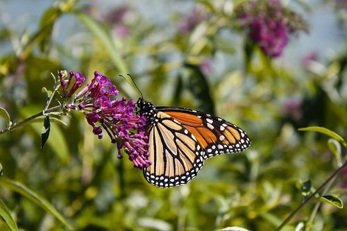 2013-02-11-butterfly.jpg