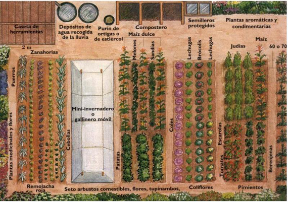 Huertos urbanos cambiar la compra por la recolecci n Rotaciones de cultivos ecologicos