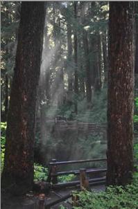 2013-02-19-Carolsforest.jpg