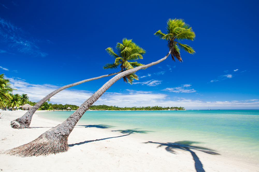 Palm trees hanging over stunning lagoon with blue sky, Fiji