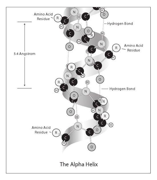 2013-02-26-alphahelix_sm.jpg
