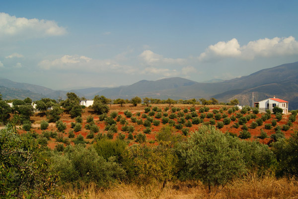 Almond groves in Órgiva