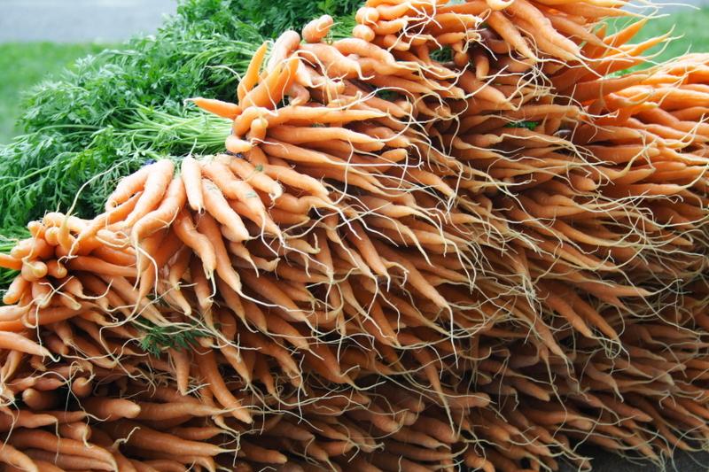 2013-02-27-Carrotswtopsphoto.jpg