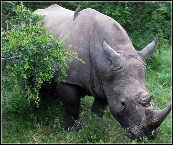 2013-03-03-RhinoCloseUp.jpg
