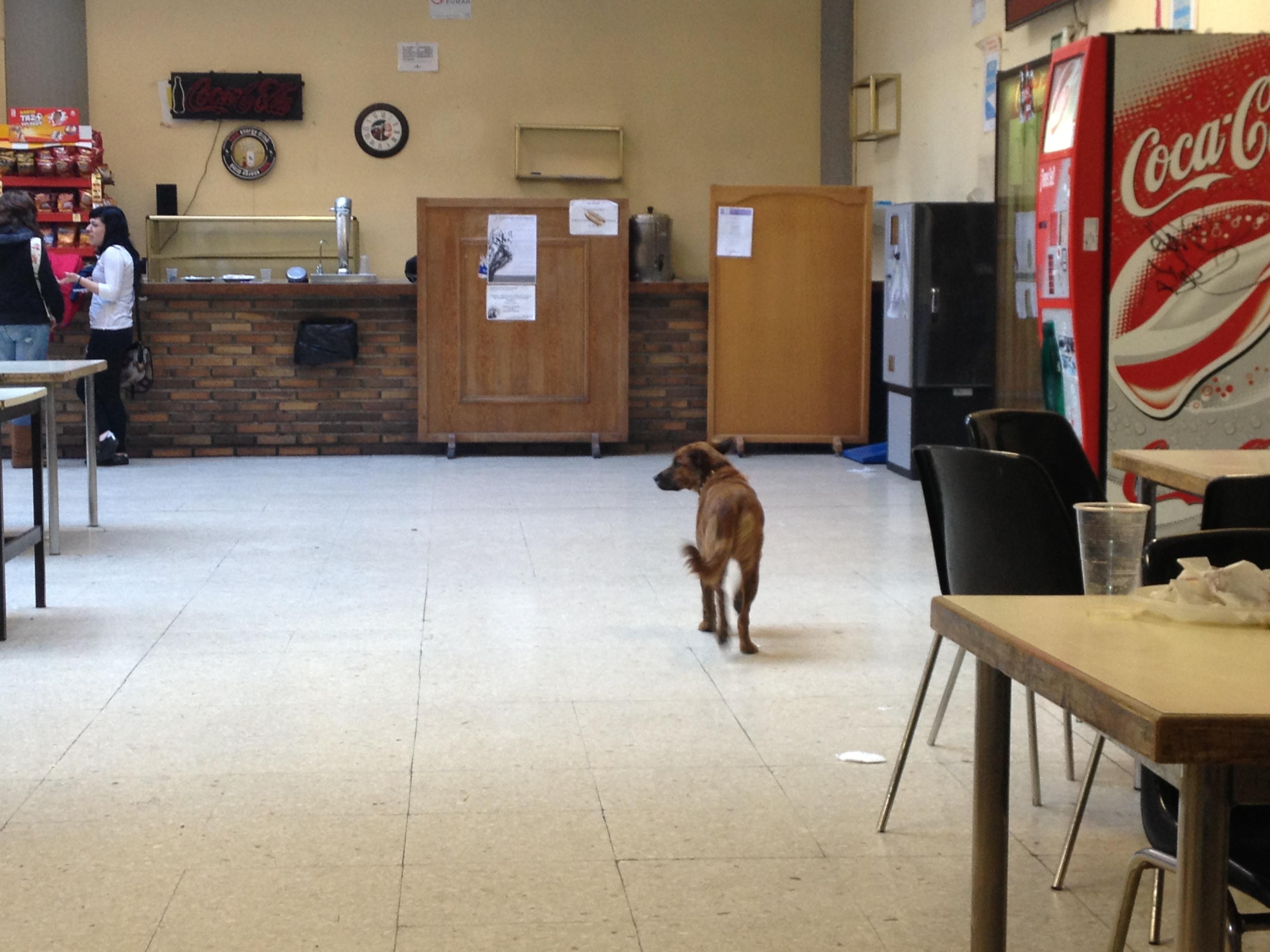 2013-03-06-Dogcafeteria.jpg