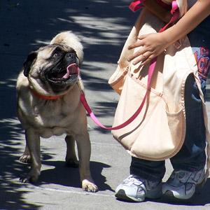 Girl with pug on leash