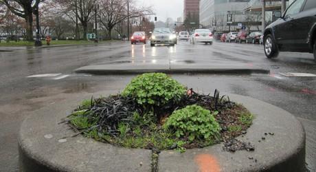 2013-03-20-tree1.jpg
