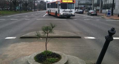 2013-03-20-tree3.jpg