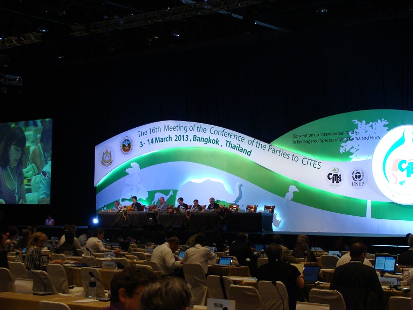 The CITES Meeting in Bangkok in full swing