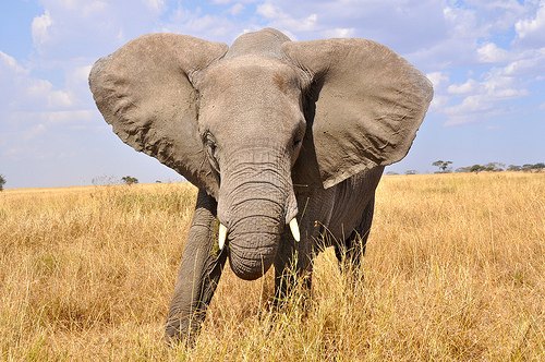 2013-03-23-elephant.jpg
