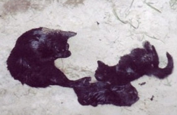 Shocking Photos: PETA's Secret Slaughter of Kittens, Puppies