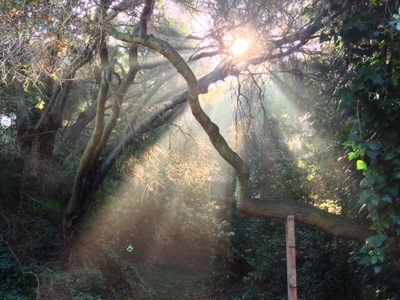 2013-04-02-Forestlight.jpg