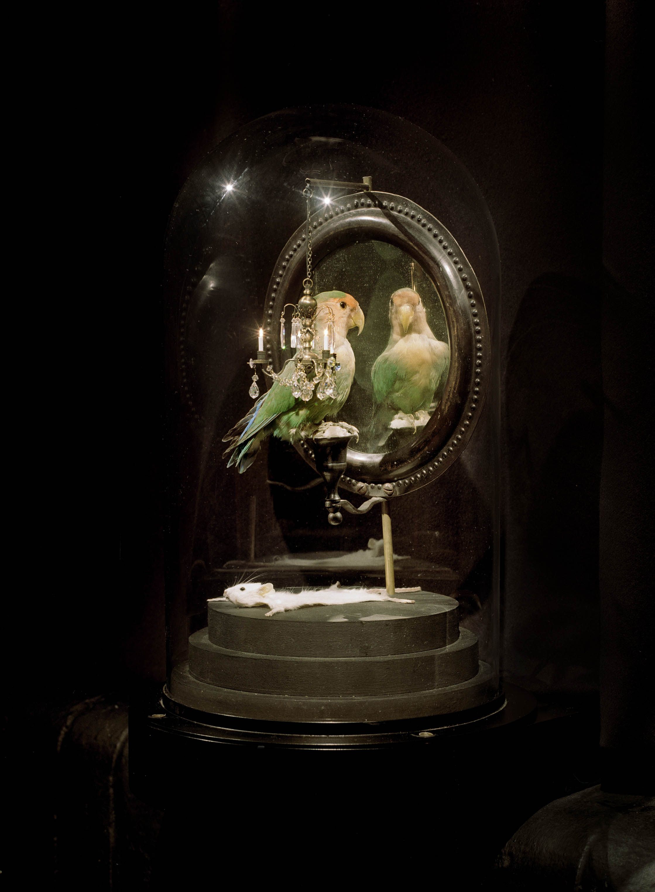 Sculpting Corpses A Conversation With Taxidermy Artist