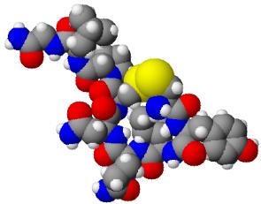 2013-04-08-Oxytocin3d2.jpeg