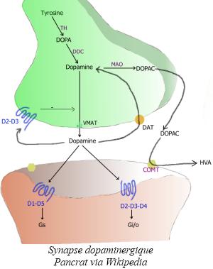 2013-04-08-Synapse_dopaminergique2.jpeg