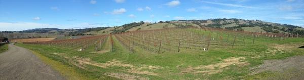 2013-04-08-californiavineyardpanoramic.jpg