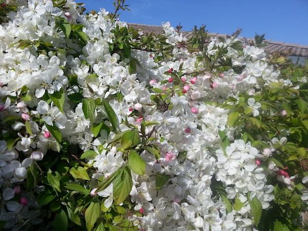 2013-04-08-flowersbloomnormal.jpg