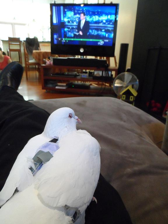 Pigeon and Craig watch Jimmy Kimmel.