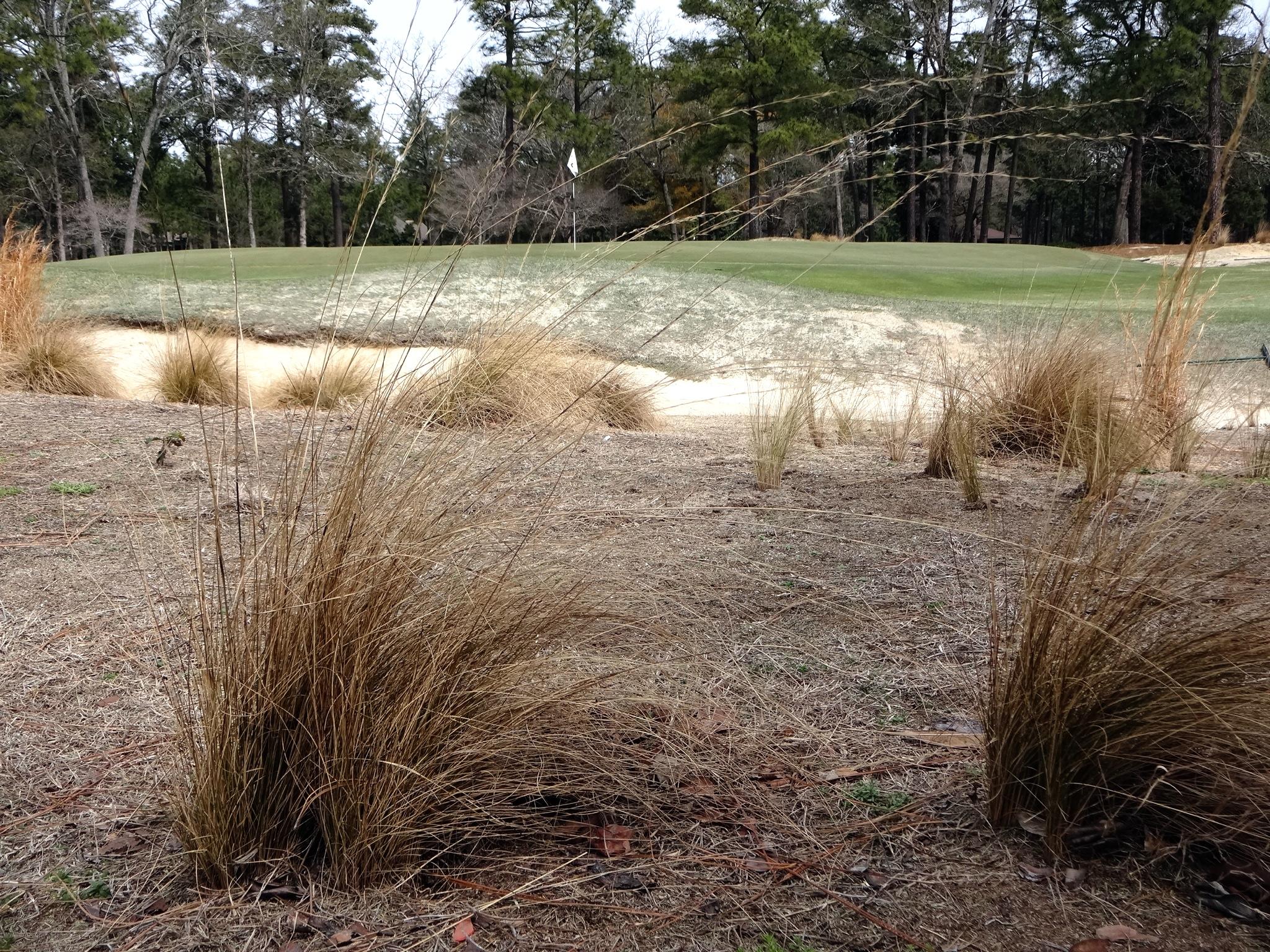 2013-04-15-pinehurst1.JPG