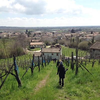 2013-04-16-vineyard2.png