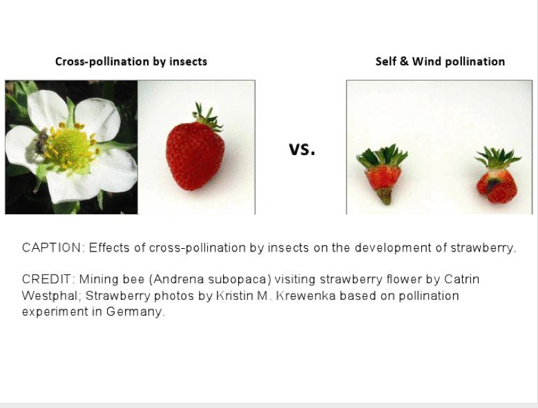 2013-04-18-kennedy_pollinator1.jpg