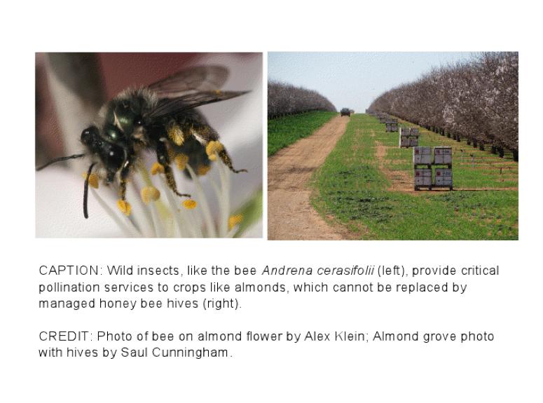 2013-04-18-kennedy_pollinator2.jpg