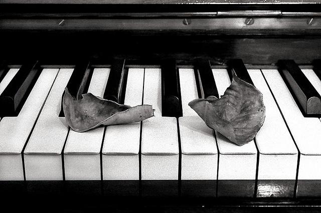 2013-04-24-pianokeyswleaves.jpg