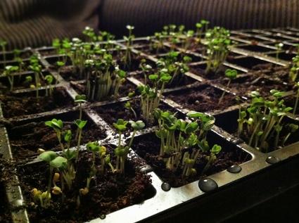 2013-04-25-Seeds.jpg