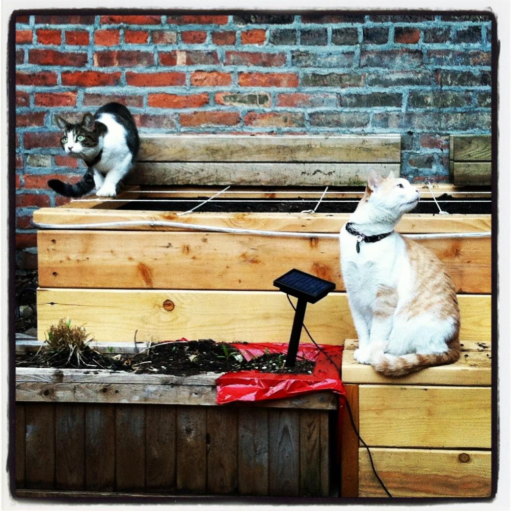 2013-04-30-cats.JPG