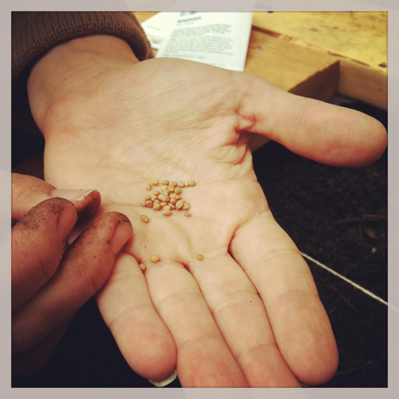 2013-04-30-seeds.JPG