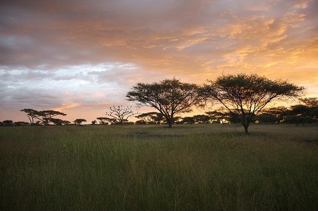 2013-05-07-SerengetiSunsetFlickrforHP.jpg