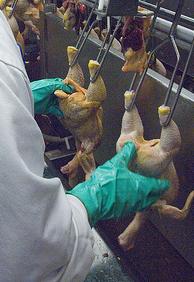 2013-05-07-poultry_inspector_crop.jpg