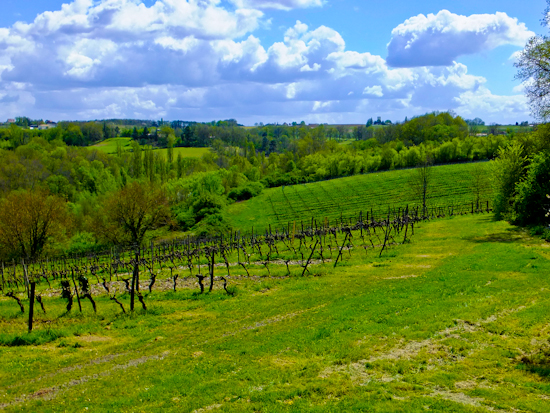 2013-05-11-VineyardChateauHautGarrigue.jpg