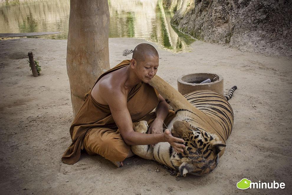 2013-05-13-TigerTemple.jpg