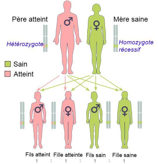 2013-05-14-infographiecancerdisein.jpg