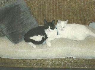 2013-05-21-cats2.jpg