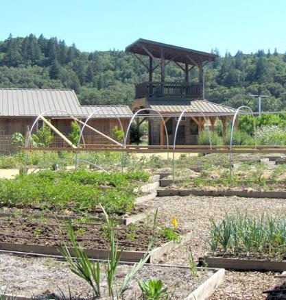 2013-05-23-garden2.JPG