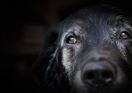 Signs Your Pet May Have Arthritis
