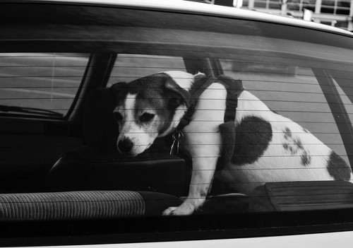 2013-06-06-dogincar3crop.jpg
