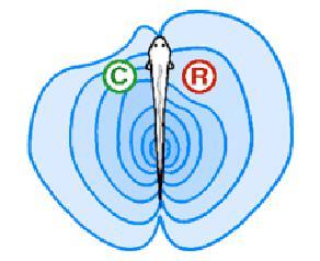 2013-06-06-electrolocalisation.jpg