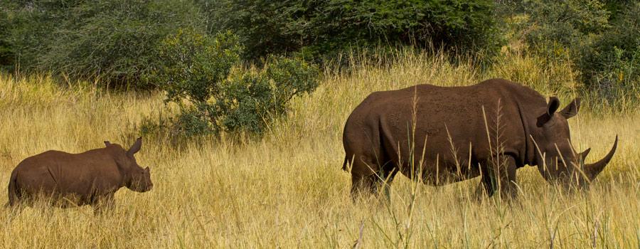 2013-06-06-rhino.jpg