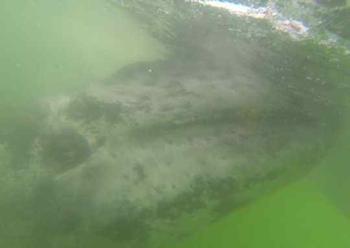 2013-06-07-whalehuff.jpg