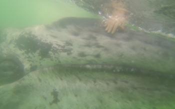2013-06-07-whalehuff2.jpg