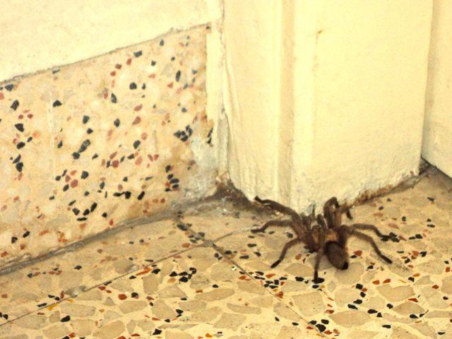 2013-06-11-spiderwars3.jpg