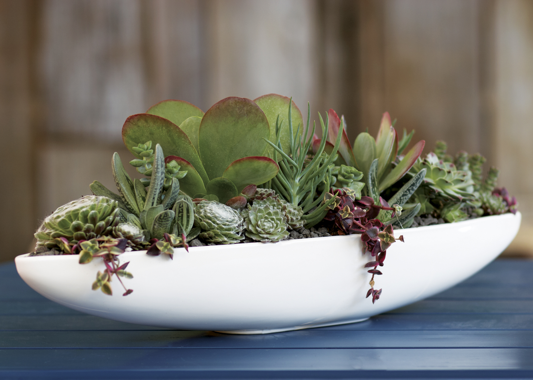 Three cool garden projects huffpost - Best indoor succulents ...