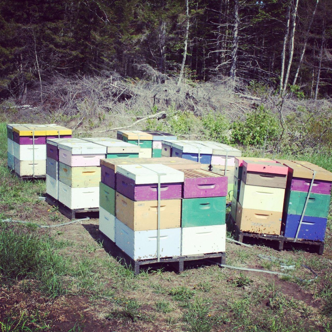 2013-06-12-hives.jpg