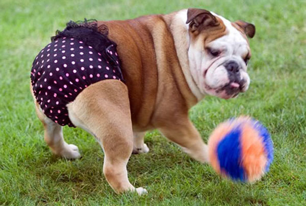 Dogs Wearing Underwear: Need We Say More?